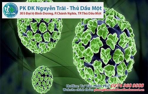 Khám phá đặc điểm của virus HPV